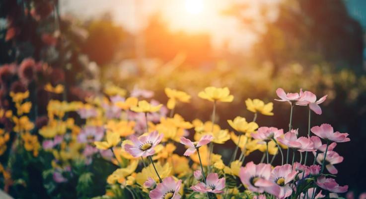 Make Your Garden Look Like a Million Dollar Oasis – Top 3 Tricks