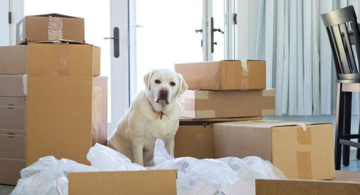 6 Handy Tips for Moving With Your Dog
