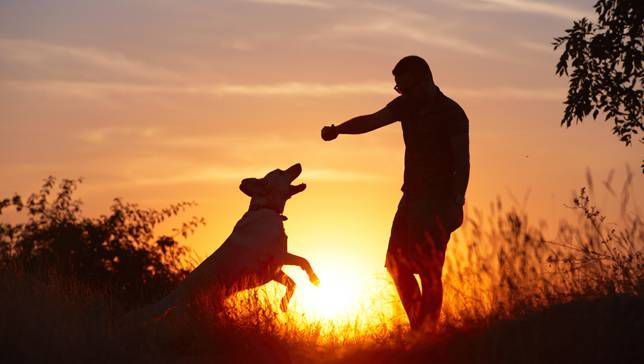6 Exercises That Are Better With Dogs